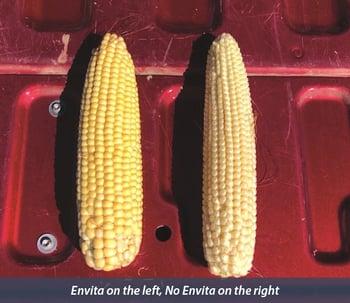 Envita Ear Comparison